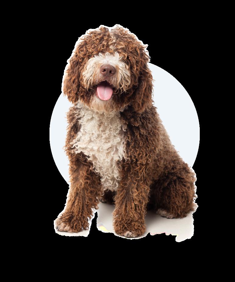 Petmagiq Hund